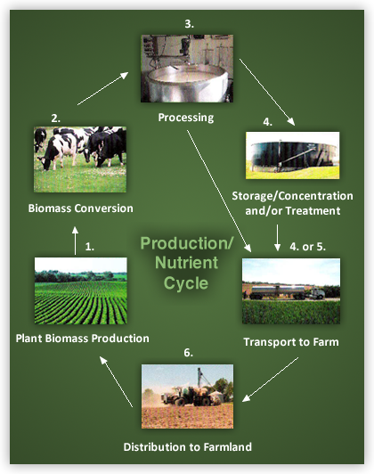 Production Nutrient Cycle
